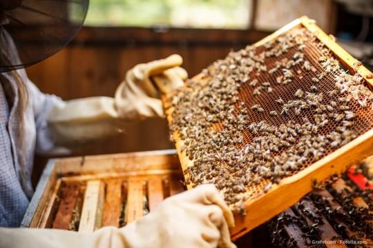 Burt's Bees - Naturkosmetik mit Bienenwachs aus den USA