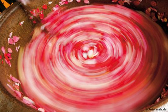 Wirkung und Einsatz von Rosenöl und Rosenwasser in der Naturkosmetik