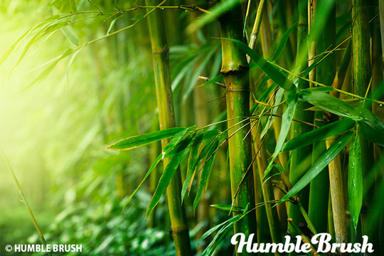 Humble Brush - Bambus